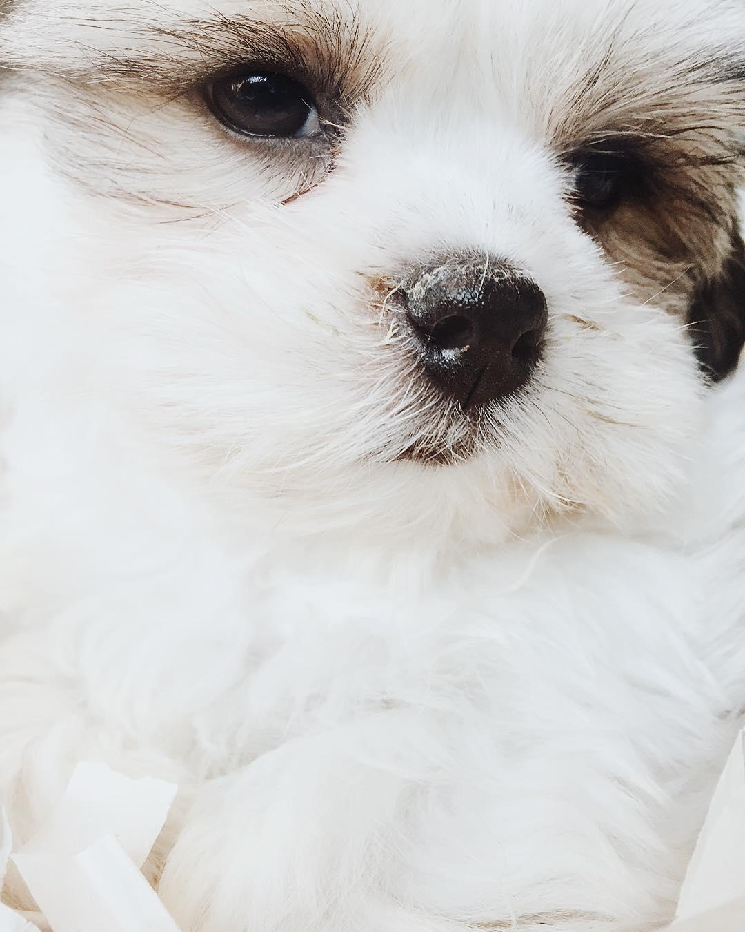 babydog celinemarks newyork
