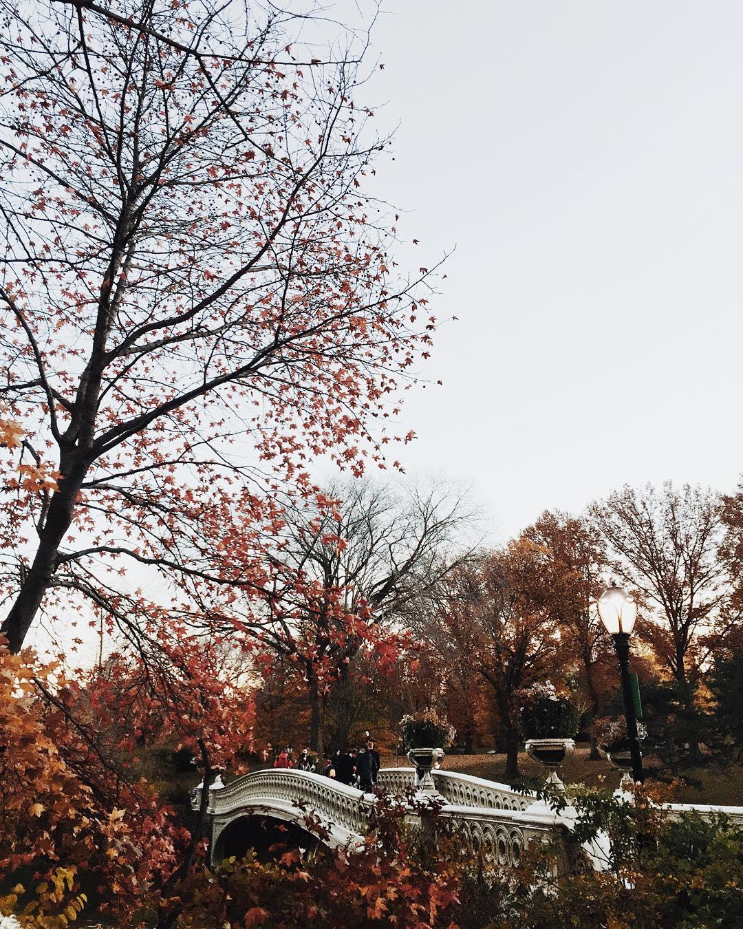 Encore une belle journe et joyeux Thanksgiving  centralpark celinemarks