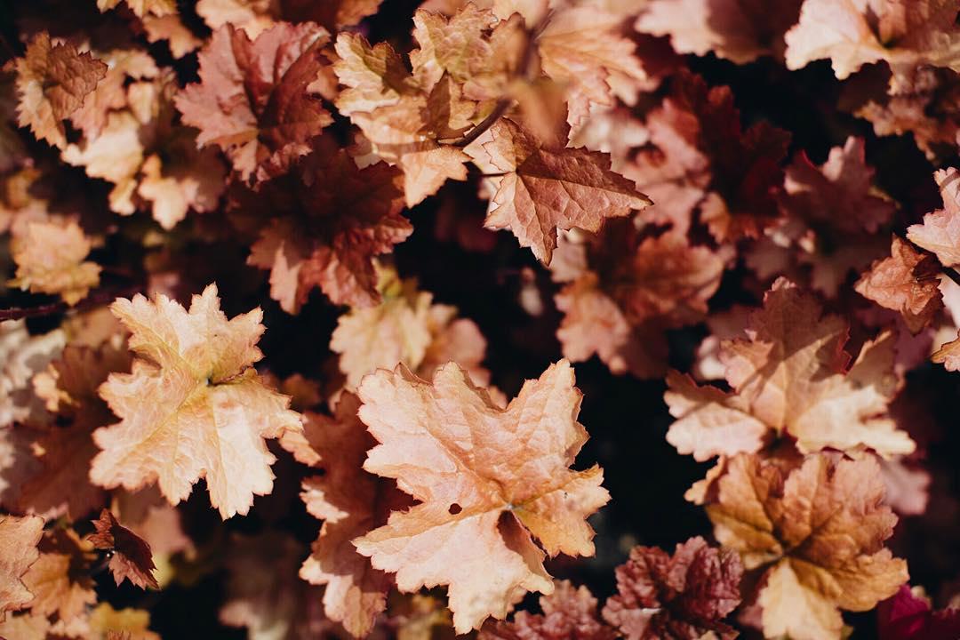 Cette jolie saison quest lAutomne celinemarks automne