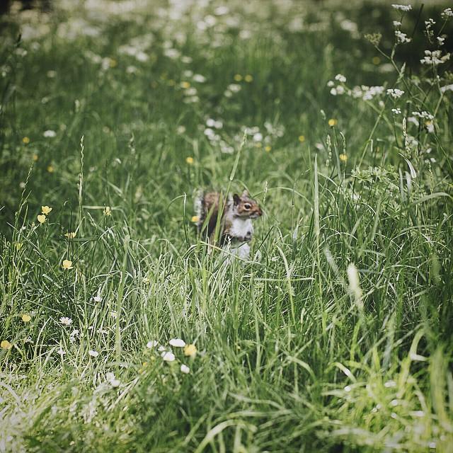 #london #regentspark #squirrel