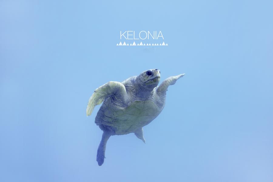 kelonia_1