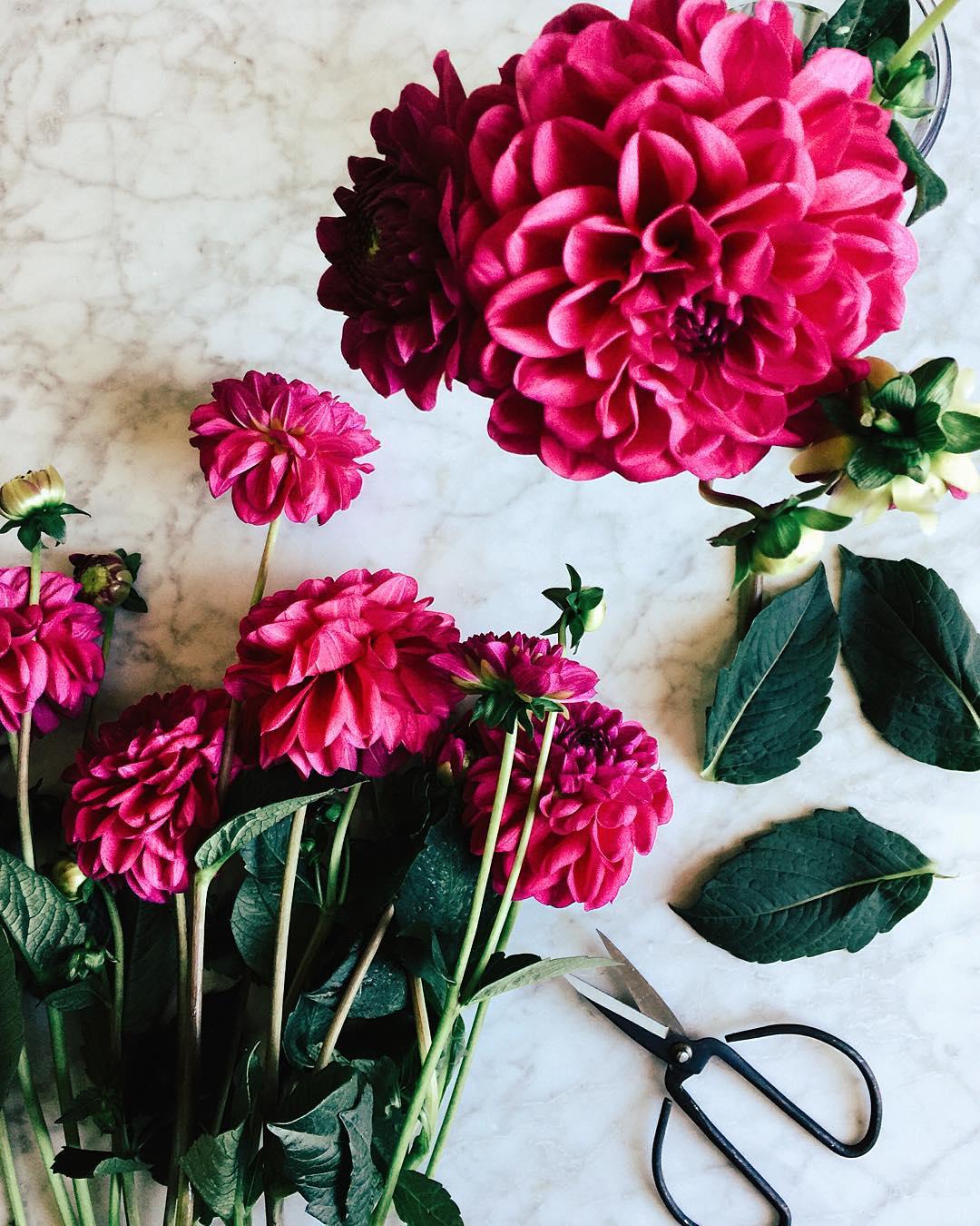 Revenir du march avec ses fleurs prfres flowers dhalia celinemarks