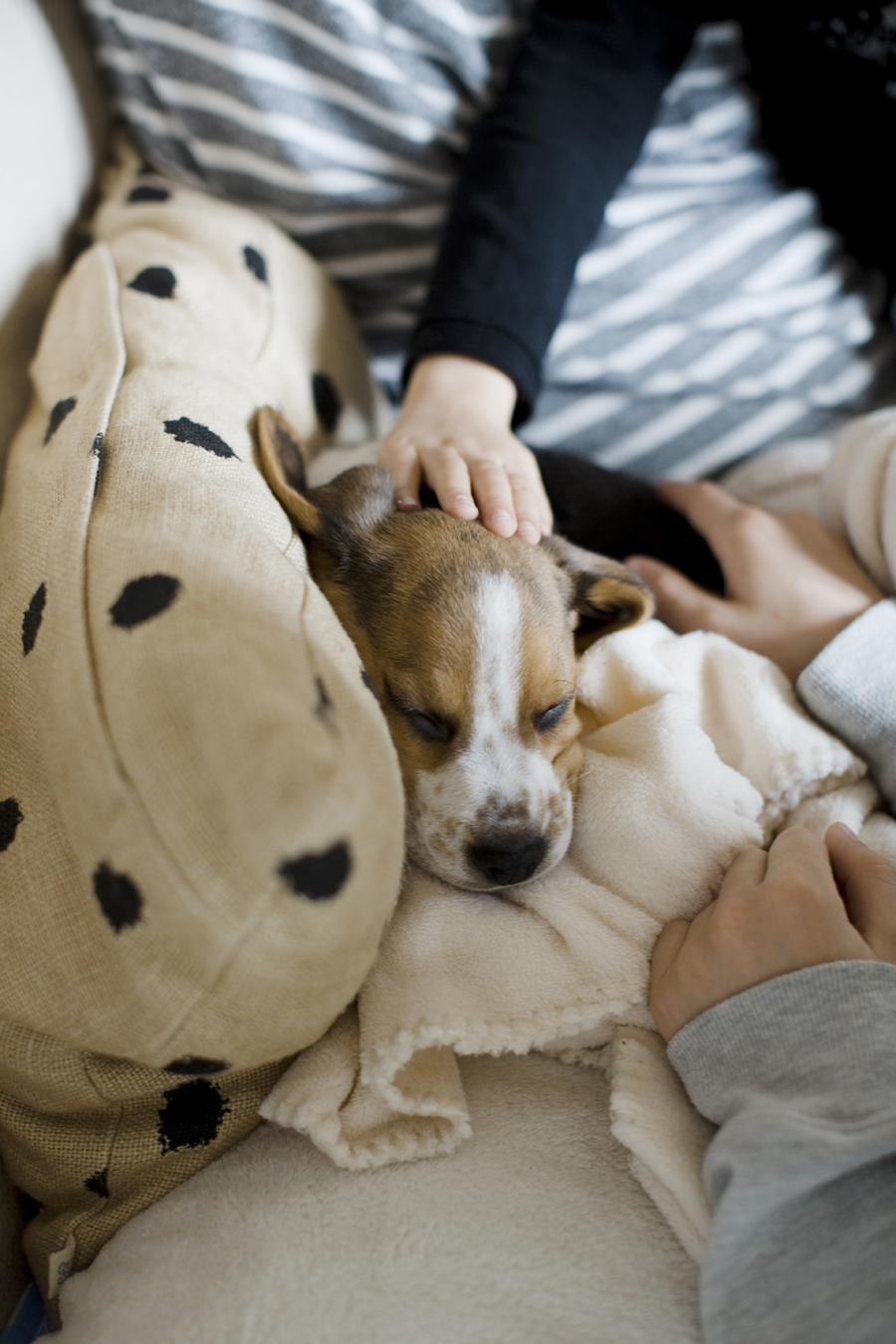 charly_beagle_boy_2b