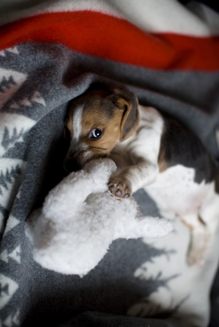 charly_beagle_boy_portail_1
