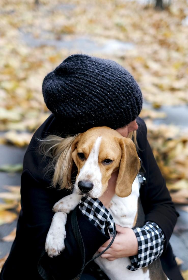 charly_beagle_13mois_portail