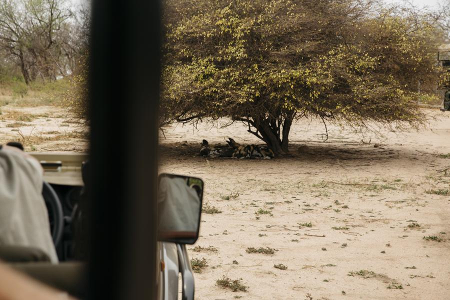 afrique_du_sud_relais_chateaux_camp_jabulani_42