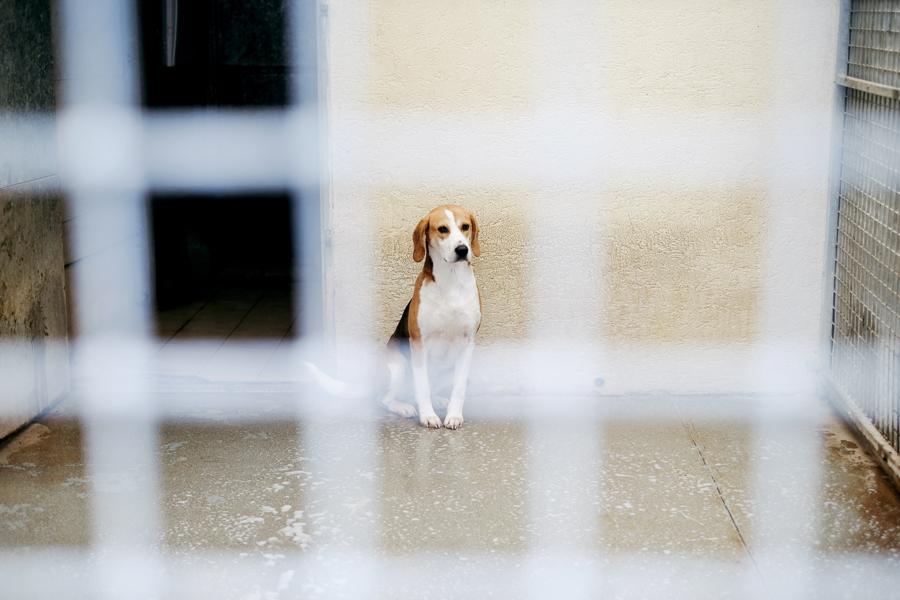 spa_noel_des_animaux_refuge_chamarande_1