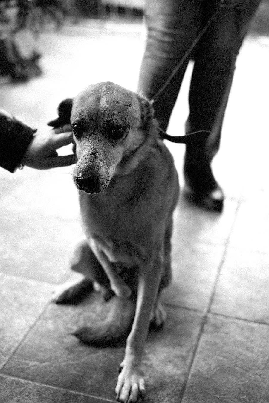 spa_noel_des_animaux_refuge_chamarande_41