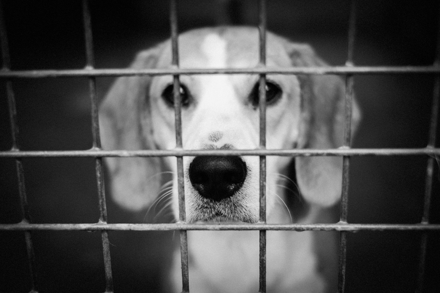 spa_noel_des_animaux_refuge_chamarande_5