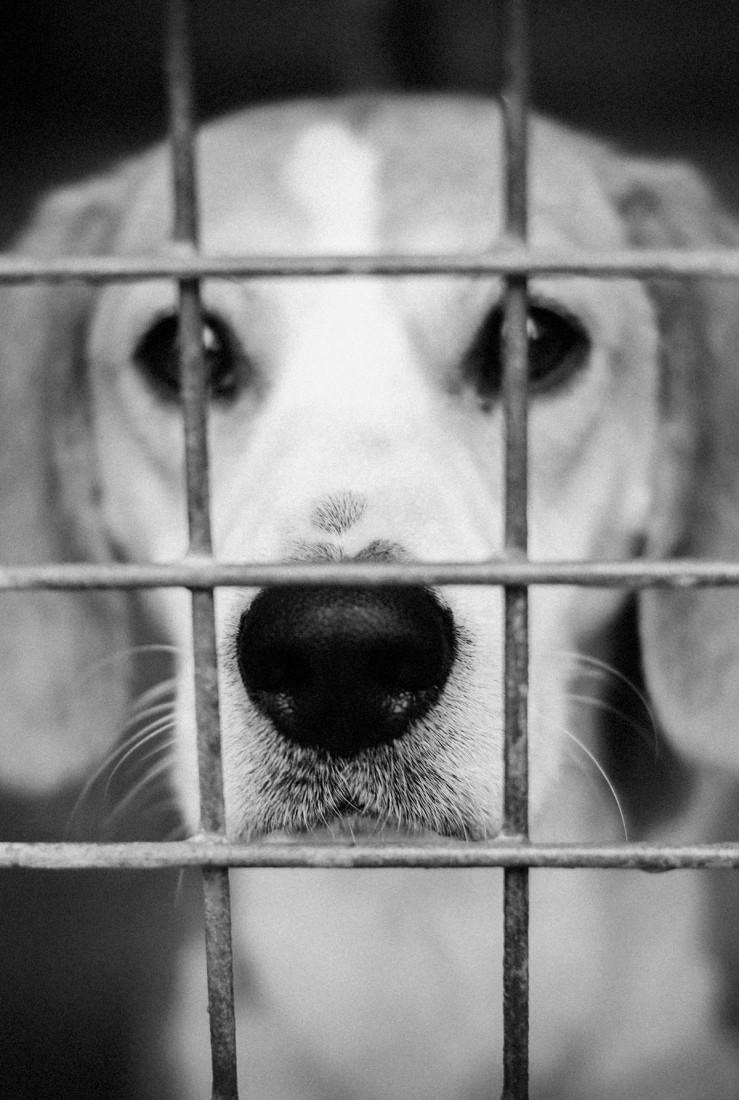 spa_noel_des_animaux_refuge_chamarande_portail
