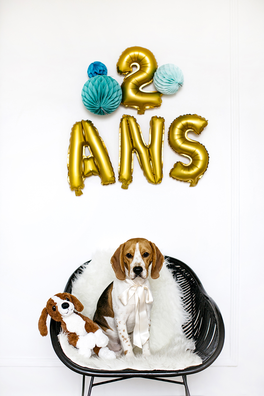 charly_beagle_boy_2ans_1a