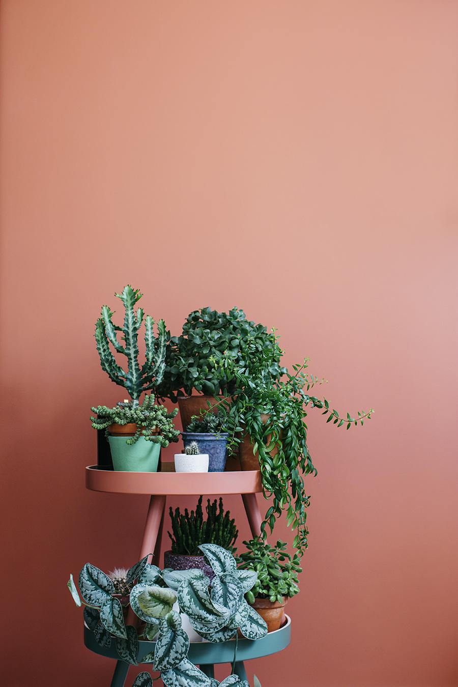 comment amenager un petit coin pour ses plantes ? - les